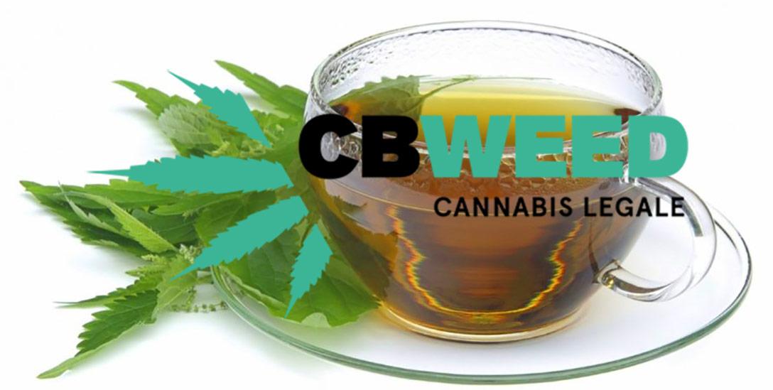 Te Cannabis Light Come Farlo Casa Conservando Effetti CBD