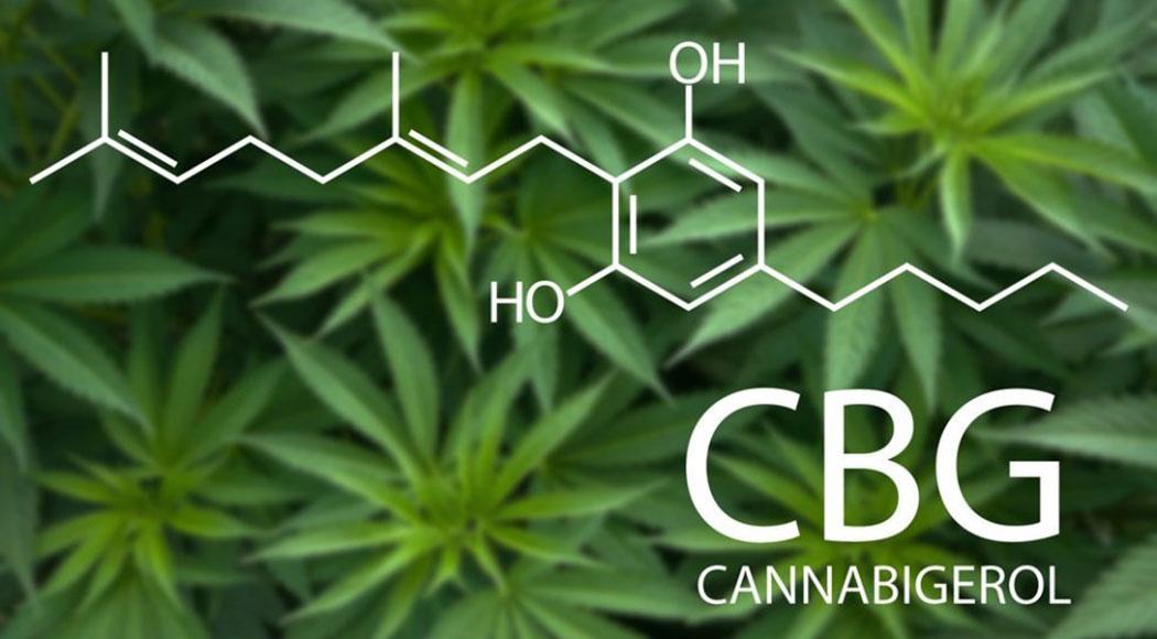 What Effects Cbg Cannabigerol Therapeutic Cannabinoid